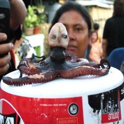gurita kepala manusia